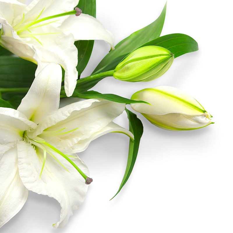 Букет из 7 белых лилий